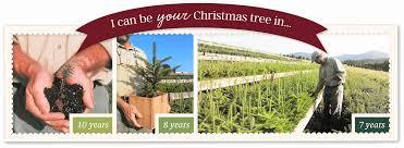 Fraser Fir Christmas Trees Nc by About Mistletoe Meadows Mistletoe Meadows