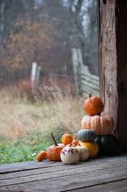 Ramona Pumpkin Patch by Best 25 Pumpkins Ideas On Pinterest Fall Pumpkins Halloween