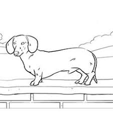 Online Coloring Pages Of Your Favorite Dog Breed