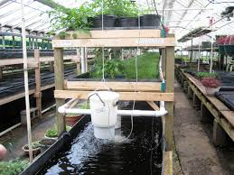 Growing Power Grows Fish, Veggies, And Community With Aquaponic ... Image Of Tambuka Backyard Fish Farming Aquaculture Pinterest Backyard Landscape Design Tilapia Farm For Sale Turn Your Backyard Into A Raise At Home Inspirational Architecturenice Genetic Research Turning Into Major Global Commodity Photo With Wonderful In The Aquaponic Update Steps Back Now Picture On Rice Capvating Aquaponics Design And Ideas House Backyards Bright Olympus Digital Camera Traing Learn From Anywhere Pictures