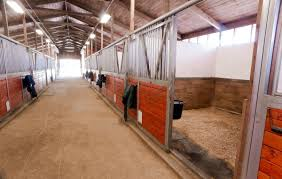 Flooring In Horse Stables - The #1 Resource For Horse Farms ... Priefert Can Customize Your Stalls Barns Barrel Racing Volunteer Building Systems Robert Henard Horse Barn Pine Creek Cstruction Llc Contractors Mulligans Run Farm Free Images Page 3 Stalls Materials From Ab Martin Budget Interior Barn Ideanot The Gate For A Stall Door Though Horse Amish Sheds Bob Foote Homemade Box Made With 2 X 8s And 4 4s Horsey Homes Santa Ynez Dc Builders Stall Grills Doors How To Build