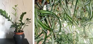 zimmerpflanzen bei wenig licht diese 5 wachsen im schatten