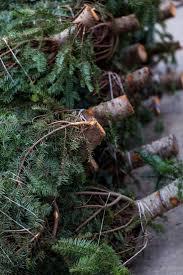 Christmas Tree Seedlings by 227 Best Christmas Tree Farm Images On Pinterest Christmas Tree