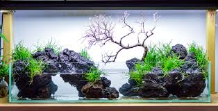 Fuck Yeah Aquascaping Aquarium Aquascaping Rocks Aquascape Designs Ideas Project Reef Rock 21 Dry Walt Smith Bulk Supply Review Real Generation 4 Digitalreefs News Info How To Live Purple Live Rock Youtube Updated Clear Pics Newbies Attempt At Aquascaping So Far 3reef Design Aquafishvietcom Bring Back The Wall News Builders Keeping Austin Club Walls For A Tank Callorecom River Suggestion Planted Forum