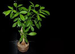 exotische zimmerpflanzen besondere pflanzen für ihr zuhause