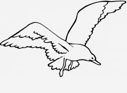 Free Flying Seagull Coloring Pages Clipart