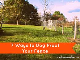 Peace In The Yard: 7 Ways To Dog Proof Your Fence | Notes From A ... 100 Dog Escapes Backyard Run Ideas How To Build A To Guide Install Homer The Beagle Capes Home Heads Kids School Determined Cannot Be Fenced Im Not Stalking You Wearing Gopro Camera Jukin Media Annie The Heat Youtube Escape Artist Climbs Fence Creative Country Scenes Coloring Book For Adults Adult Qa More Help Dogfriendly Gardens Sunset Funny Puppy Kennel