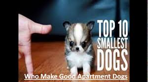 Best Non Shedding Small Dogs by Top 10 Kid Friendly Small Dogs Best Apartment Dog Breeds For