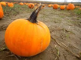 Devine Pumpkin Patch Harrodsburg Ky by Northeast Ohio Pumpkin Patches Corn Mazes Fall
