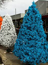 Flocked Christmas Trees Decorated by Blue And White Flocked Christmas Trees Stock Photo Picture And