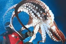 Pacific Undersea Gardens Victoria Attractions Review 10Best