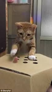 The Cats Owner Holds His Hand Underneath Box And Pops Fingers Through Holes