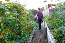 Visiting A Hillside Backyard Permaculture In Hobart... - Milkwood ... Thriving Backyard Food Forest 5th Year Suburban Permaculture Bill Mollison Father Of Gaenerd 101 Pri Cold Climate Archives Chickweed Patch Garden Design With Permaculture Kitchen Herb Spiral Backyard Orchard For The Yards Pinterest Orchards Australian House Garden January 2017 Archology Download Design And Ideas Gurdjieffouspenskycom Sustainable Farm Future Best 25 Ideas On Vegetable Youtube
