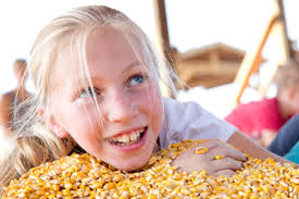 Omaha Pumpkin Patch by The Big List Fall Events Haunted Houses Pumpkin Patches Corn