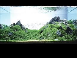 aquatic aquascaping aquarium
