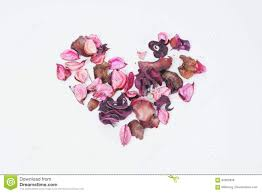 coeur de en pot le pot pourri a placé le coeur de l amour photo stock image