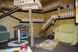 neue katzenvilla für unsere freigänger katzen tierheim