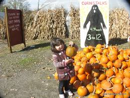 Local Pumpkin Farms In Nj by Ort Farms And Chubb Park Chester Nj Your Complete Guide To Nj