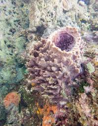 Decorator Crabs And Sea Sponges by Rubble Crest