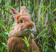 Can Rabbits Eat Pumpkin Seeds by Guard Your Garden Rabbits Official Blog Of Park Seed