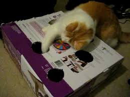 Cats Playing With Home Made Whack A Mouse Mole Seek Price Cat Toy Box