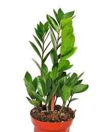 die besten pflanzen fürs badezimmer nachgeharkt