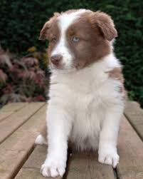 Top 10 Dogs That Dont Shed by The 25 Best Dog Breeds That Dont Shed Ideas On Pinterest