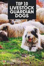 10 Best LGD Farm Dog Breeds To Herd & Protect Your Livestock Cloud Nine Dog Traing Best Houses In 2017 For Both Indoor And Outdoor Use Siberian Husky Costs Facts Infographic Ultimate Guide Farmer Tag Wallpapers Country Children Tractor Fields Farm Dogs Plastic Dog Barnhome Kennel Petshop Online 25 Food Bowls Ideas On Pinterest Project Food Cindee X Stackhouse Owyheestar Weimaraners News 614 Best Australian Cattle Images Blue Heelers 5 Facts About Dogs Deworming The Horse Owners Resource Lonely Escapes Yard To Get A Hug From His Friend Youtube Oakwood Park Morton6711