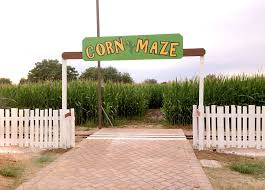 Pumpkin Patch Near Marana Az by Get Lost In These 9 Awesome Corn Mazes In Arizona This Fall