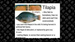 An Evidence Free Internet Meme Says That Tilapia One Of The Most Popular Freshwater Fish Consumed In United States Is Killing Our Families
