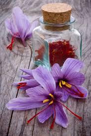 growing saffron how to grow saffron crocus bulbs