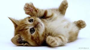 combien coûte un chat la première ée combien d argent prévoir