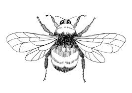 Coloring Page Bumblebee