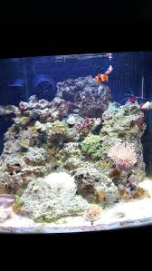Wanting To Re-aquascape My Biocube 14 - Aquarium Forum 75 Gallon Tank Aquascape Ideas Please Reef Central Online Community Minimalist Aquascaping Page 3 2reef Saltwater And How To A Aquarium Youtube Tank Rockscape To Drill Cement Your Live Rock Gmacreef Columns In A Saltwater Callorecom Pieter Van Suijlekoms Revisited Is There Science Live Rock Sanctuary The Why I Involuntarily Redid My Mr 7