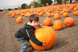 Pumpkin Patch San Jose 2015 by Best Pumpkin Patches And Farms In The San Francisco Bay Area