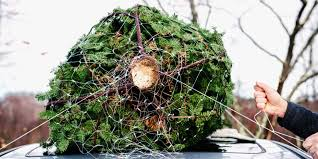 Fraser Fir Christmas Trees Delivered by 5 Best Christmas Tree Delivery Services In Nyc Get Real