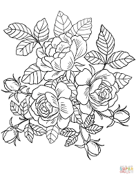Printable Rose Flower Coloring Apage Full Size Of