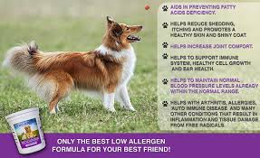 Low Shedding Dogs In India by Low Shedding Dogs In India 100 Images Breeds That Don T Shed