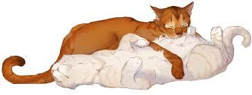 warrior cat warrior cat rankings warrior cats amino amino