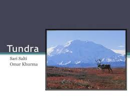 arctic tundra the frozen desert ppt video online download