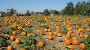 Pumpkin Patch Petting Zoo Illinois by A Spooky Tale In Time For Halloween Weather Cuts Into Pumpkin
