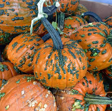Portland Pumpkin Patch Corn Maze by Calendar Portland Or The Pumpkin Patch