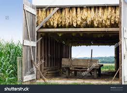 Tobacco Barn Amish Wagonlancaster Countypennsylvania Stock Photo ... Amish Buggy Parked In A Barn Lancaster County Pennsylvania Usa Beautiful Red Barns Pa As Shown Stories Barn Stock Photos Images Alamy Reclaimed Wood Fniture Handmade Pa The Choo Model Train Magic See Mom Click Two Long With Metal Silos At Close Up Funny Sleepy Tabby Kitten Sleeping On Bench 123 Best Custom Kitchens Wood Images Pinterest 30 Flooring New Hardwoods