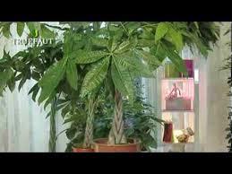 plantes vertes d interieur plante d intérieur la choisir et l entretenir jardinerie