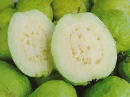 الجوافة! images?q=tbn:ANd9GcQ