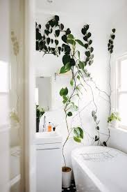 Good Plants For Bathroom by Best 25 Green Bathrooms Ideas On Pinterest Green Bathroom Tiles
