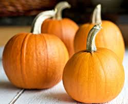Preparing Fresh Pumpkin For Pies by Pumpkin Pie Recipe For Fresh Or Canned Pumpkin Homemade Food Junkie