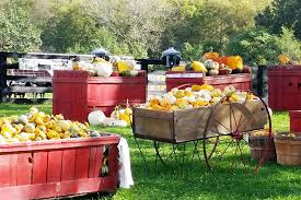 Dollingers Pumpkin Farm Minooka Il by Chicago Area Pumpkin Patches 40 To Choose From Chicago Tribune