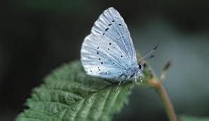 Attracting Insects To Your Garden by How To Attract Butterflies To Your Garden Natural History Museum