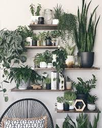 indoor dschungel blumentopf ideen wohnzimmer pflanzen